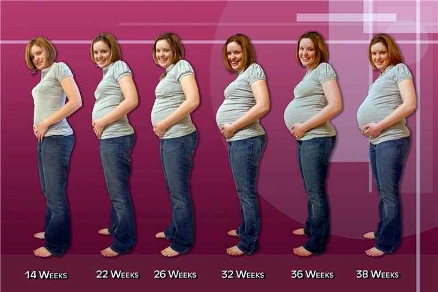 Что нужно сделать чтобы стать беременной 14